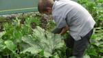 School Garden 2010 - Enda