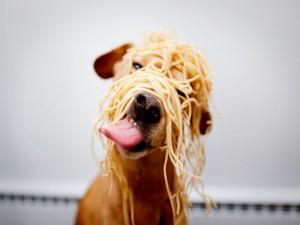 I love spaghetti.
